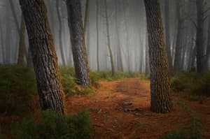 #920 Forest pathway